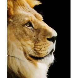 Pouf géant lion